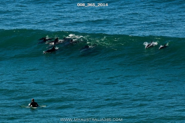 Мастер класс по серфингу от дельфинов на Бондае