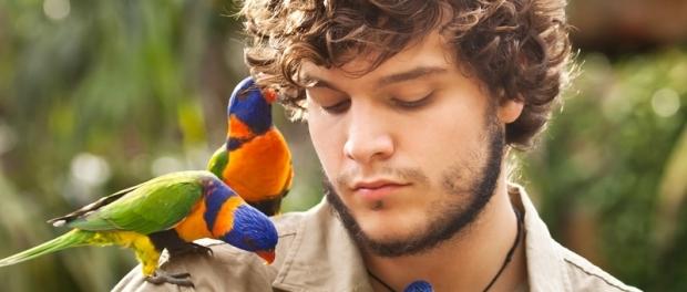 австралийские попугаи лорикеты