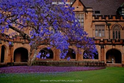 фотограф в Сиднее, Австралии и Океании
