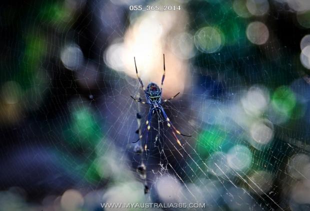 австралийские пауки