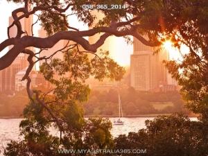 58/365/2014   Королевский Ботанический сад в Сиднее