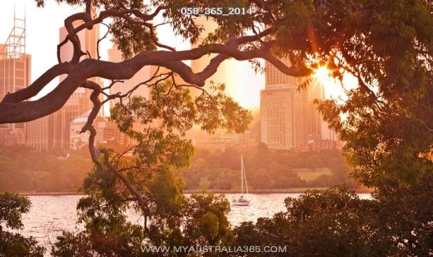 58/365/2014 | Королевский Ботанический сад в Сиднее