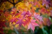 осень в Голубых горах