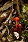 грибы в Австралии