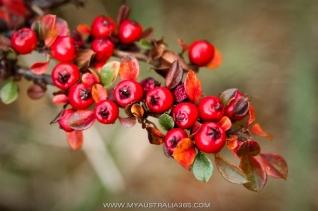 осень в Голубых горах в Австралии