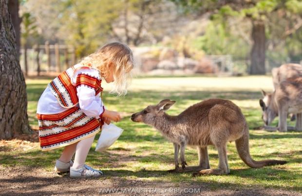 Дети и ручные кенгуру