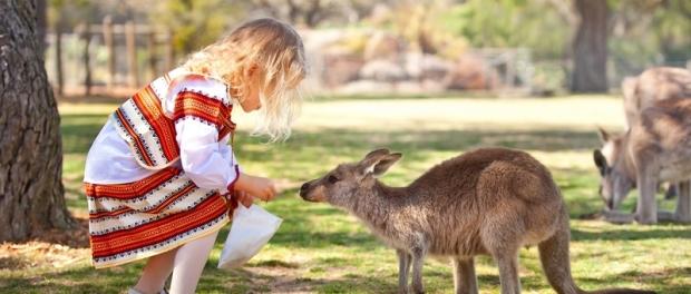 кормление кенгуру с рук
