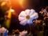 Дети - «цветы жизни»