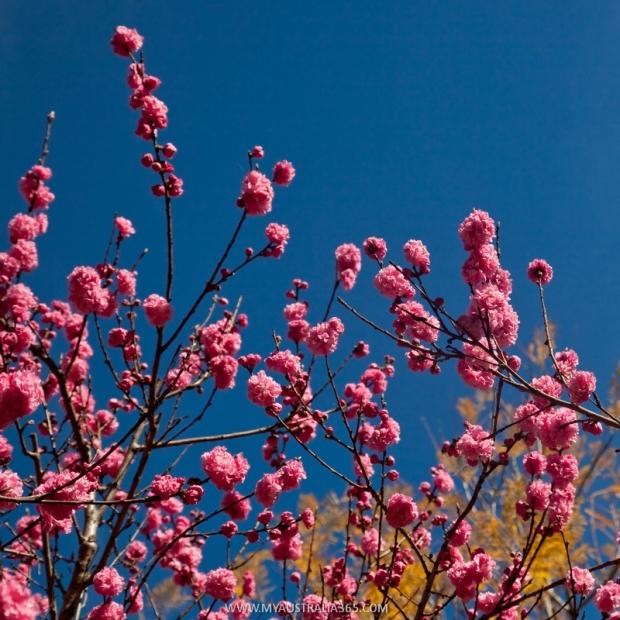 австралийская весна
