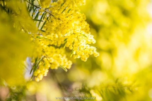 национальный цветок Австралии тест на гражданство