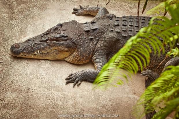 Австралийские крокодилы-убийцы