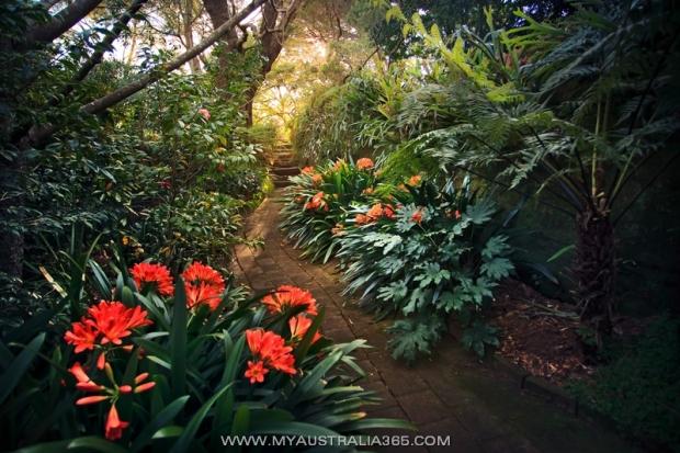 Парк Камеллий Camellia Gardens