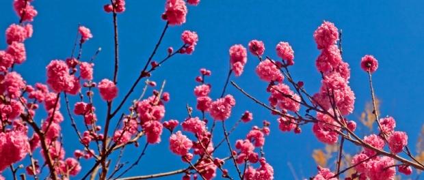 Первый день весны в Сиднее