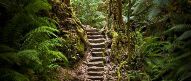 Дождевые леса rainforests в Голубых горах Blue Mountains